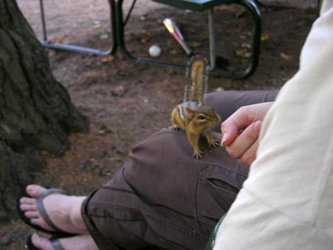Friendly Chipmunks None Pinehurst Cottages Amp Motels
